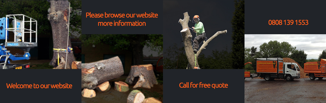 Tree Surgeon Biggin Hill
