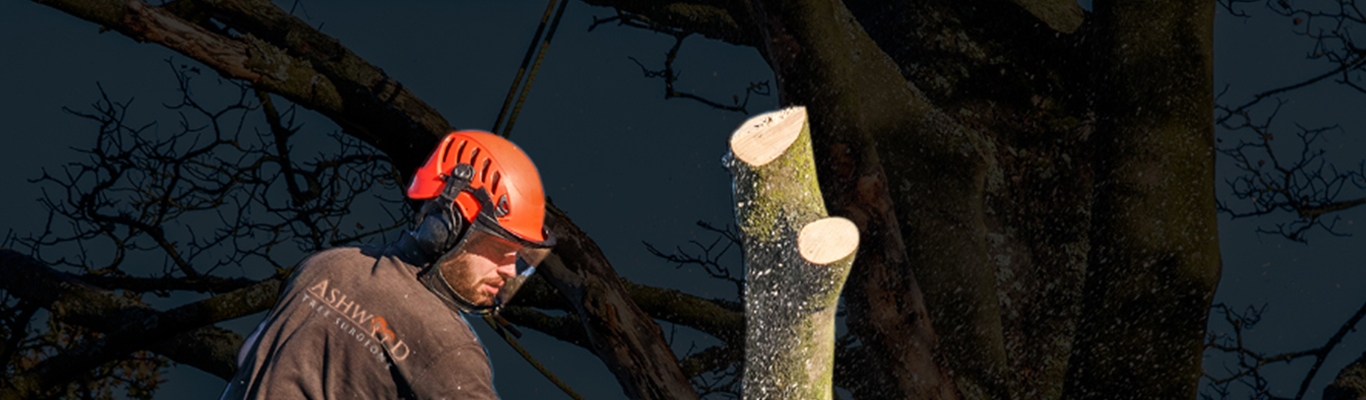 Commercial Tree Surgeons Biggin Hill